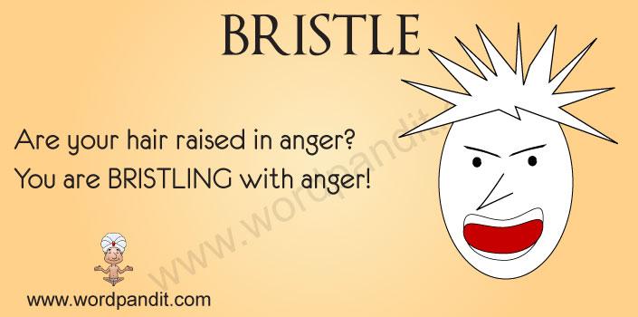 picture for bristle