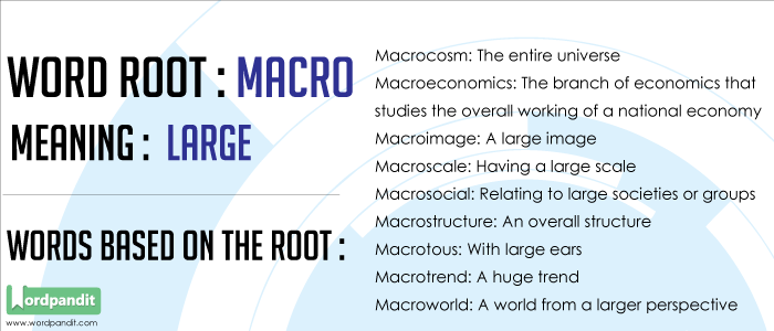 Words based on the Macro Root Word