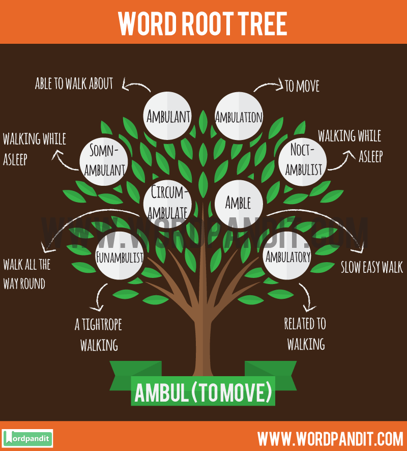 ambul Root Word: Learn words related to word root ambul
