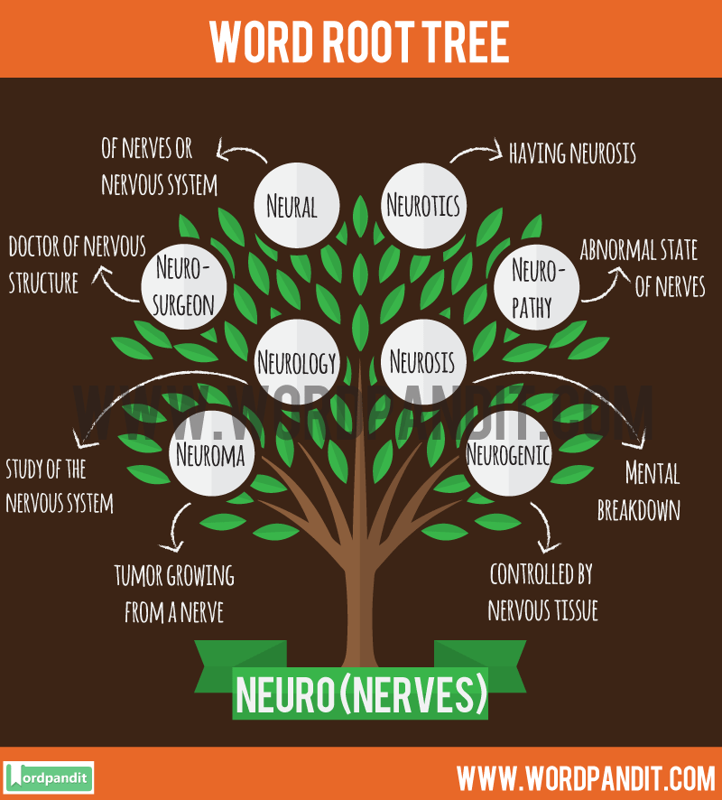 Neuro Root Word: Learn words related to word root Neuro