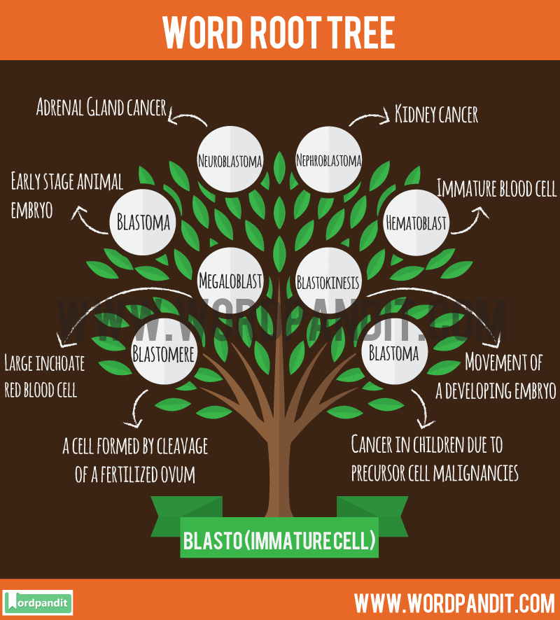 Blasto Root Word: Learn words related to word root Blasto