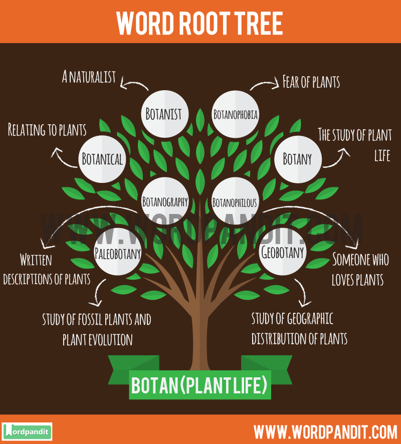 Botan Root Word: Learn words related to word root Botan