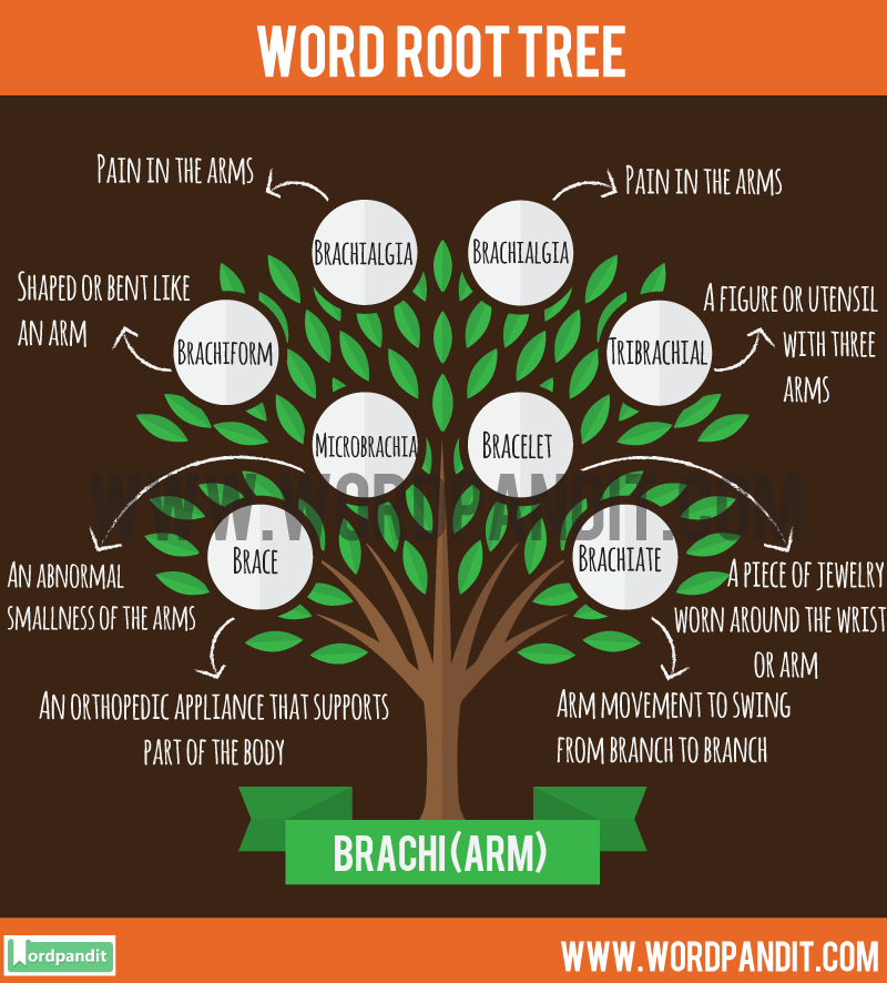 Brachi Root Word: Learn words related to word root Brachi