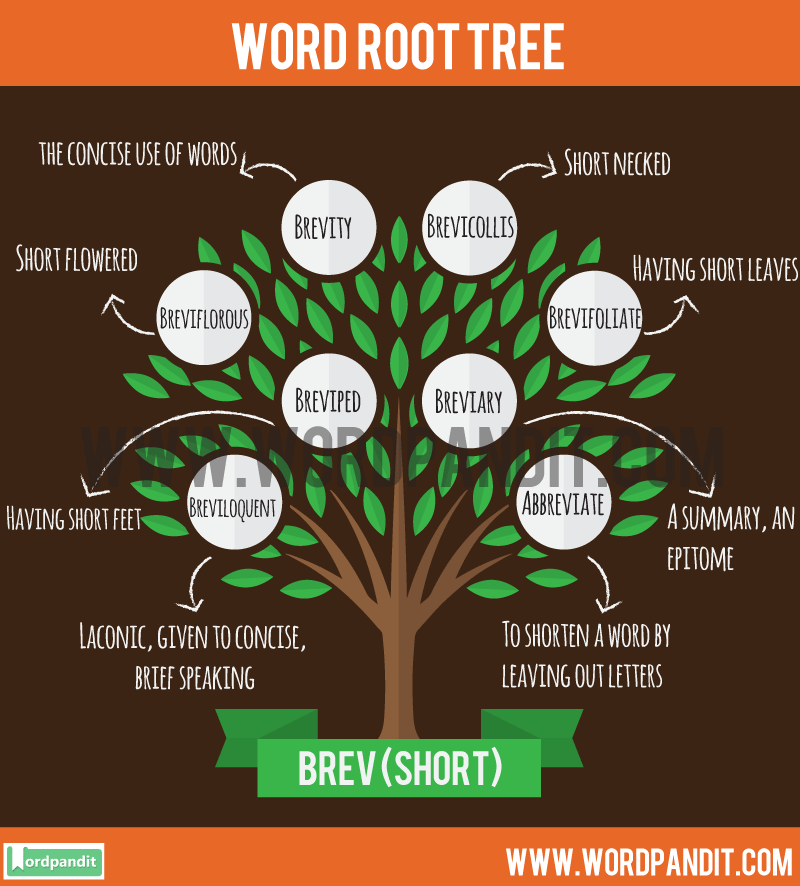 Brev Root Word: Learn words related to word root Brev