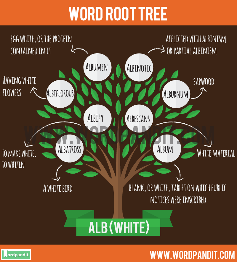 Alb Root Word: Learn words related to word root Alb