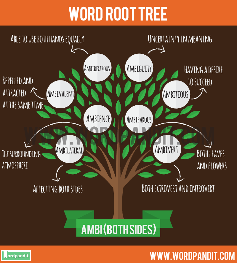 Ambi Root Word: Learn words related to word root Ambi
