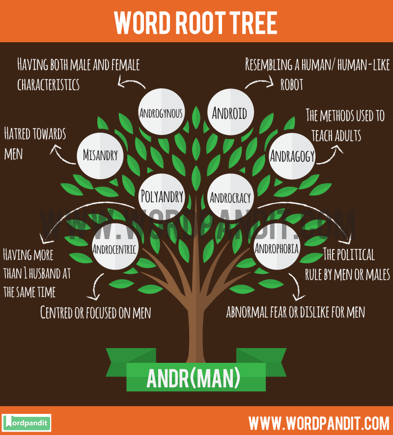 Andr Root Word: Learn words related to word root Andr