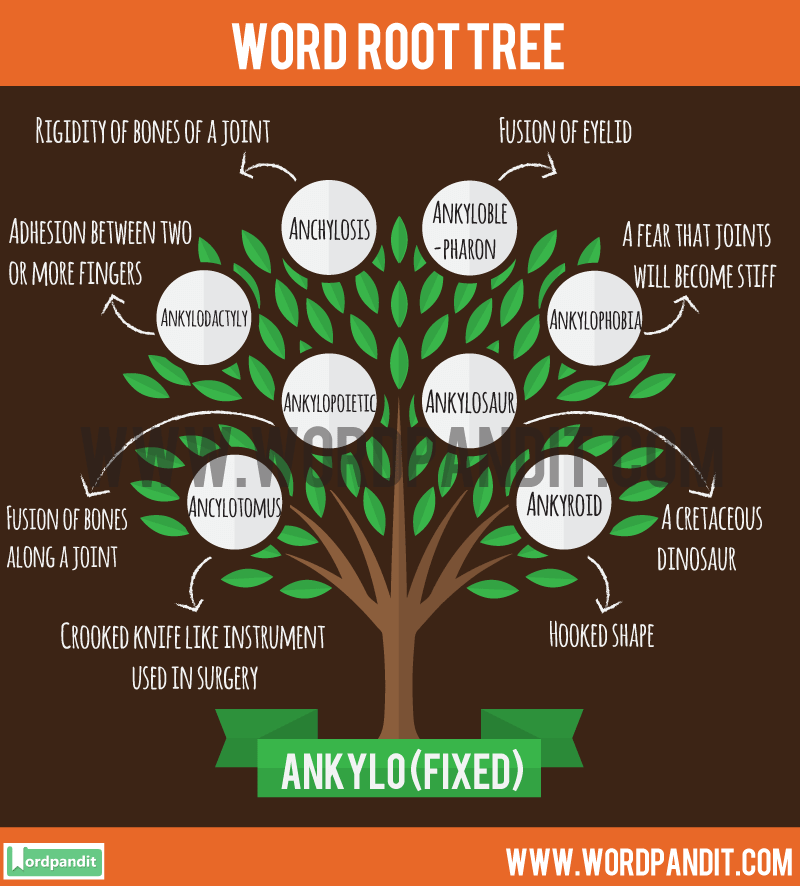Ankylo Root Word: Learn words related to word root Ankylo