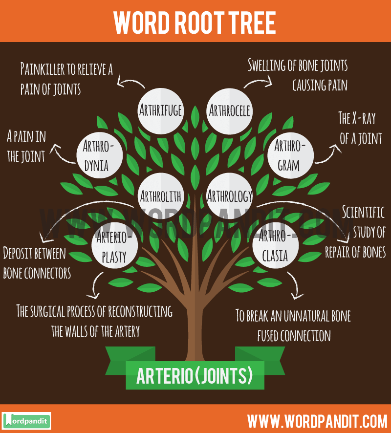 List Of Words Based OnArterio Root Wordwith Their Meaning