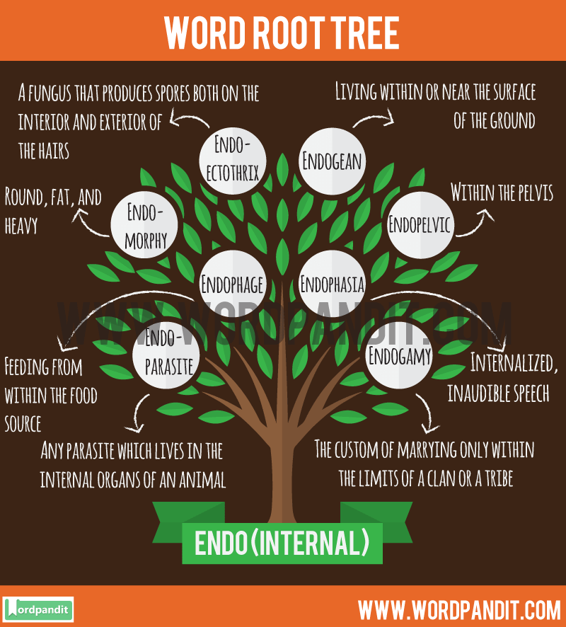 meaning definition of endo root word and words based on